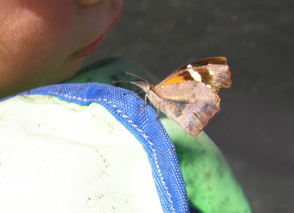 Moth or butterfly on life jacket.