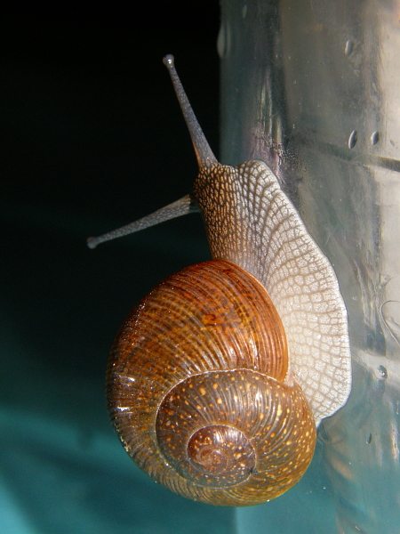 Snail on drinking cup