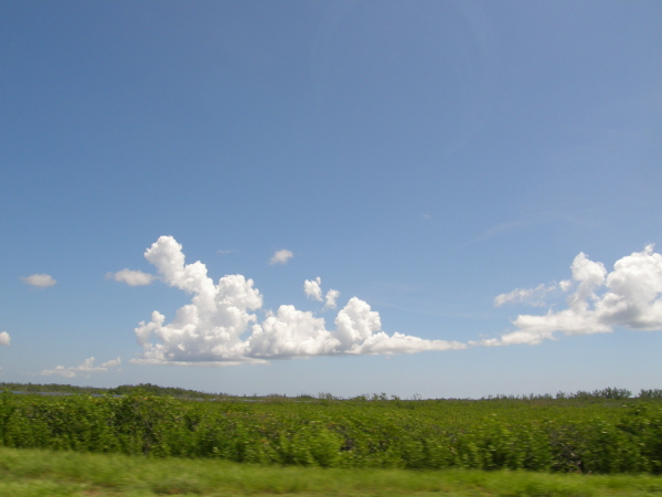 Landscape of drive from Key Largo to Miami