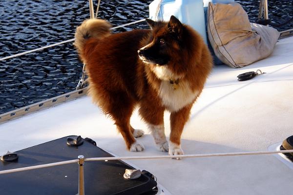 Sandbar the dog on his sailboat