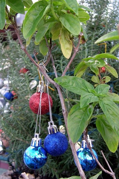 Christmas ornaments in the herb garden