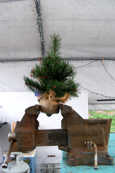 Tiny Christmas tree in vise