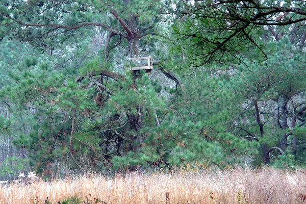 Deer stand in a large tree