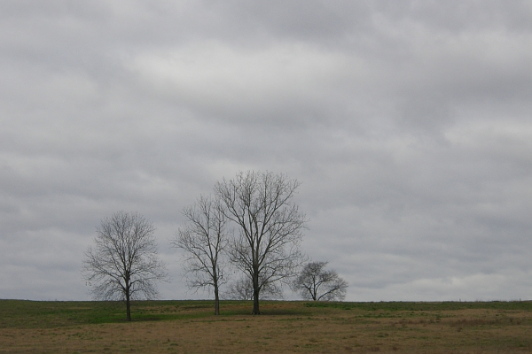 Leafless trees in a field on a cloudy day.