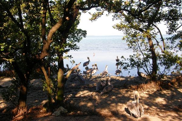 Pelicans on the beach of the Wild Bird Sanctuary