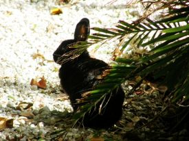 Today's inlet: Bunny.