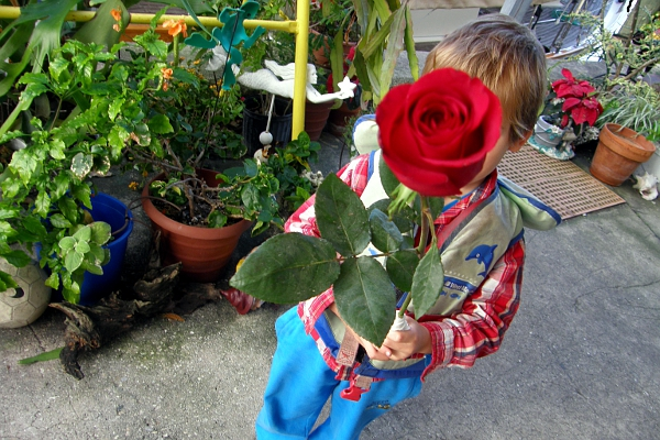 Boy in life vest holding red rose at dock garden