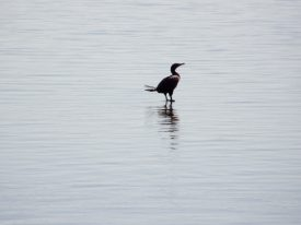 Today's inlet: Walking on water.