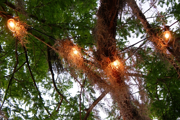 Tree lights covered in Spanish Moss.