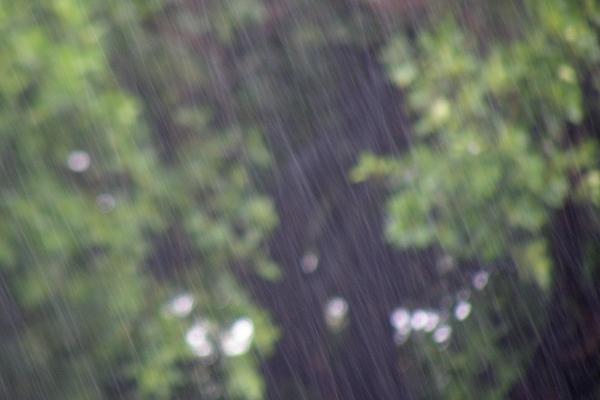 Blurry photo of foliage through the rain