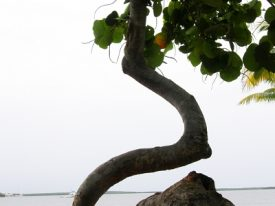 Today's inlet: Curvy tree.