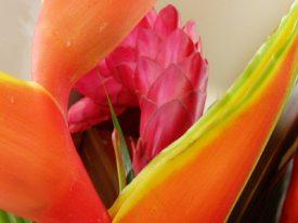 Today's inlet: Tropical arrangement.