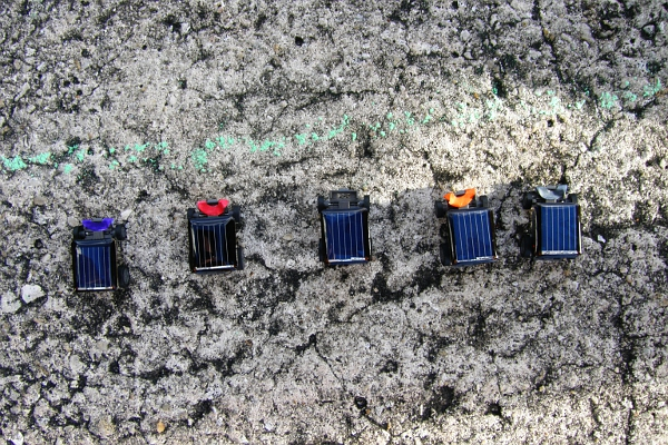 Tiny toy solar cars lined up in the shade.