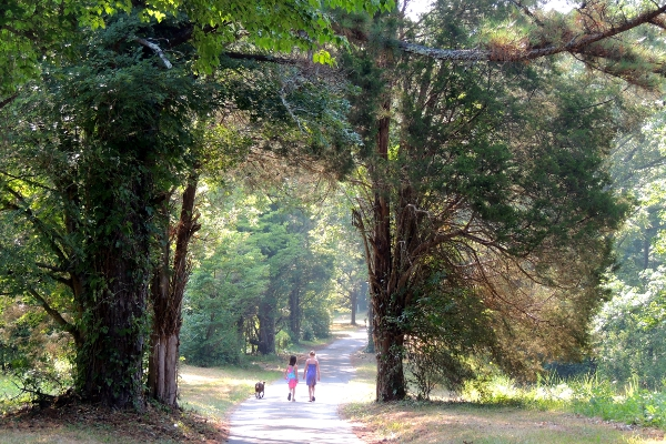 Two girls and a dog walking a narrow road beset with trees
