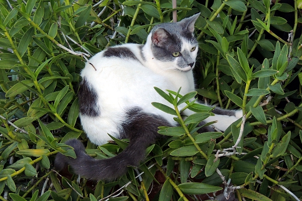 Cat nestled in a plant.