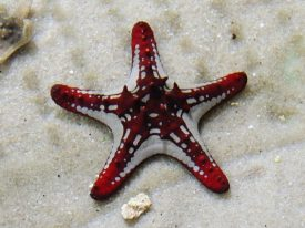 Today's inlet: Starfish.