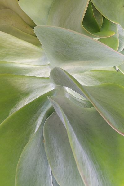 Succulent plant at the local dock garden.