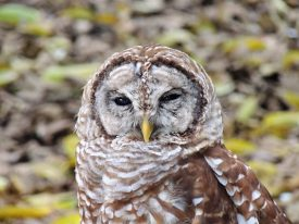 Today's inlet: Owl.