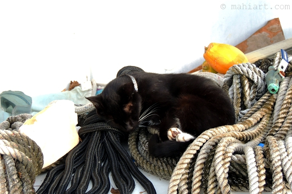 Black cat with white paws sleeping on top of dock lines
