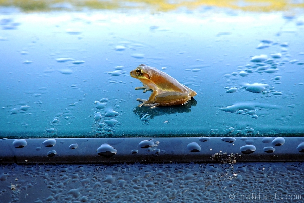 Closeup of little frog on the roof of a blue truck
