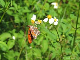 Today's inlet: Butterfly 2.