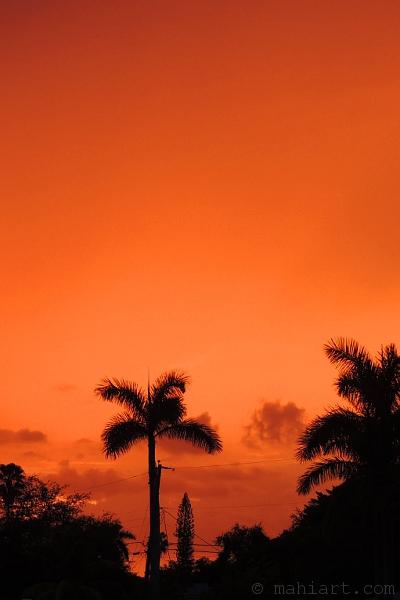 Blood orange sky behind palm tree