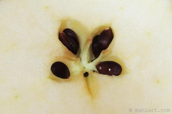 Split apple core showing seeds inside