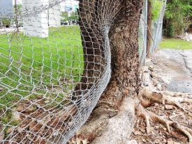 Today's inlet: The tree and the fence.