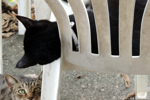 Two cats looking at each other through plastic chair