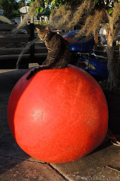 Cat on large round fender