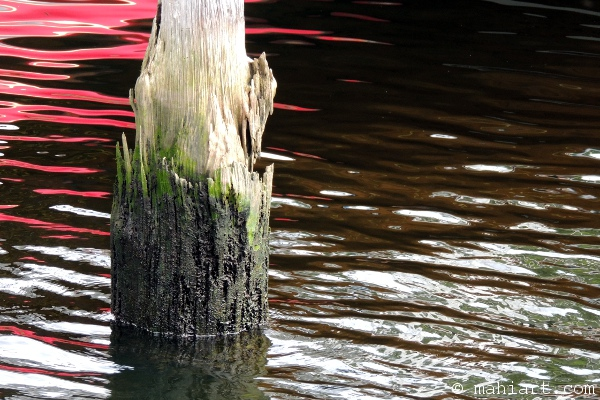 Weathered dock piling