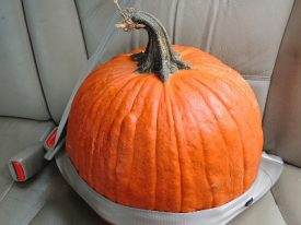 Today's inlet: Pumpkin safety.