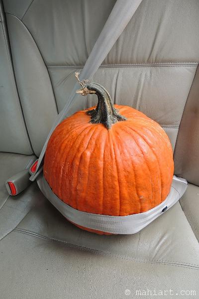 Pumpkin wearing a seat belt