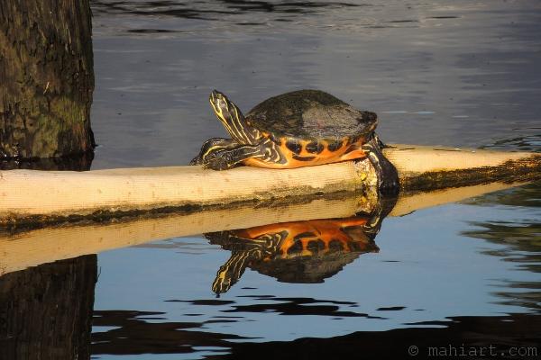 Turtle on barrier float