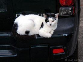 Today's inlet: Bumper cat.