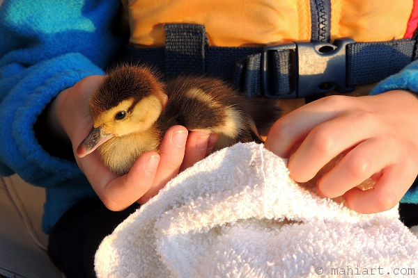 Child holding baby duckling
