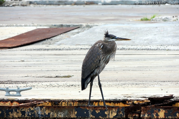 Heron in old boat yard