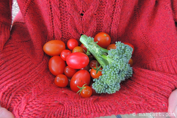 Tomatoes and broccoli from a vegetable garden.