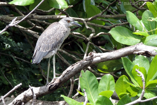 Young bird sitting high on tree branch