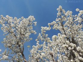 Spring, springing.