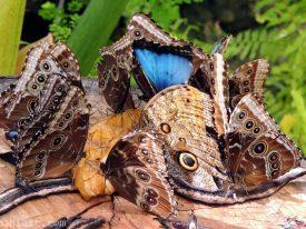 Butterfly banquet.