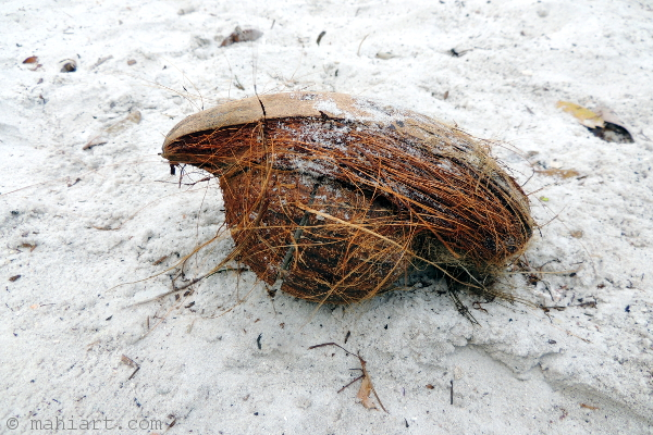 Weathered coconut on beach