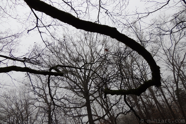 Winter branches.