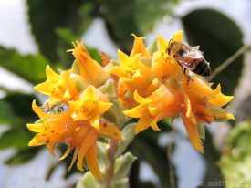 Succulent & bee.