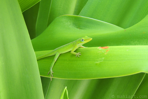 Green anole lizard matching its environment perfectly