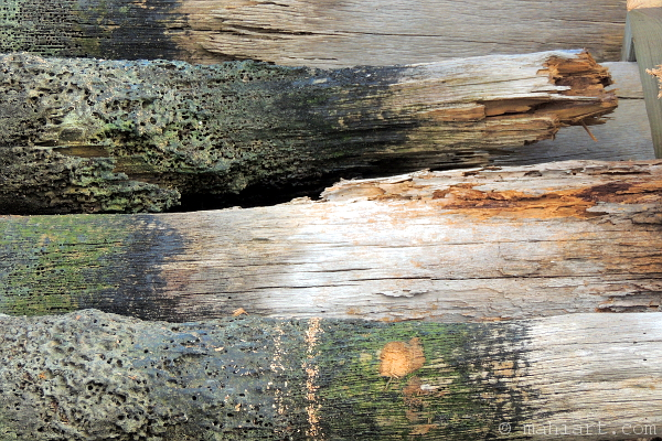 Stacked up pilings of a demolished old dock.