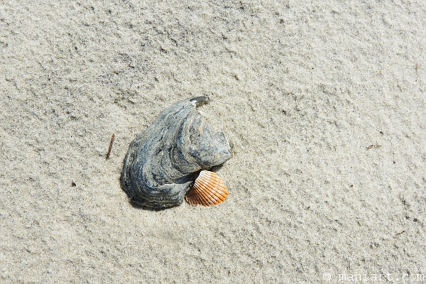 Two broken shells nestled together on the sand