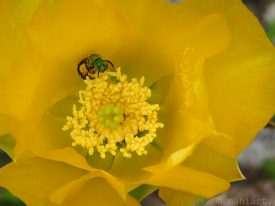 Pollenation.