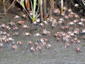 Crab convention.