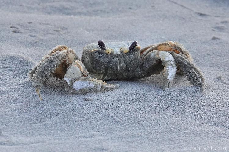 Sand on crab.